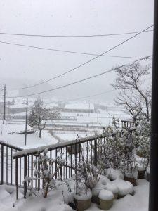 雪が降りました